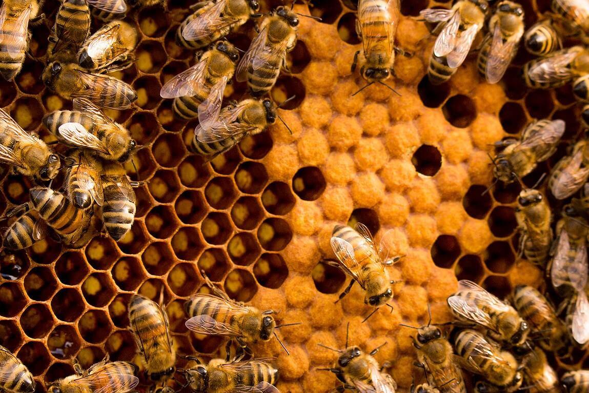 Honig aus eigener Produktion - Fabrikstraße in Böhlitz-Ehrenberg